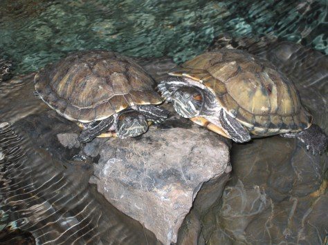 Breakfast with Turtles 002.jpg